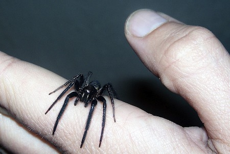 spider-hand