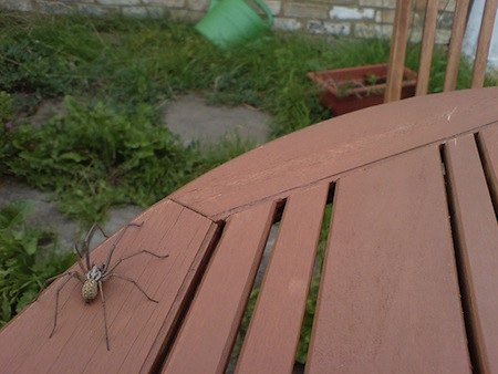 spider on a table