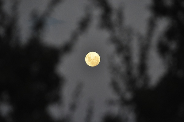 supermoon through trees