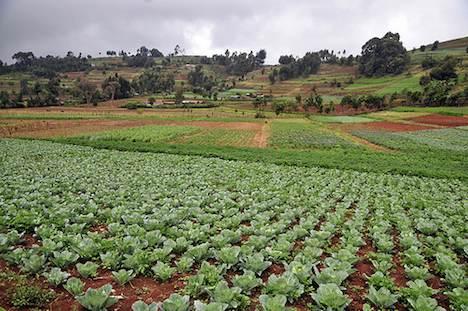 Kenya farmland