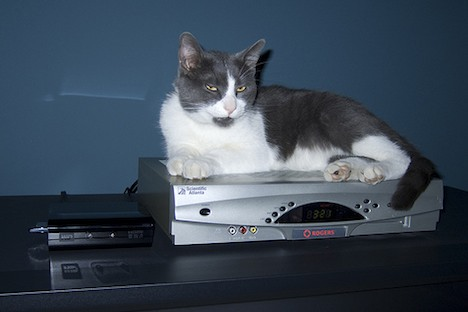 Cat-top box