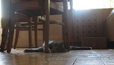 Cat during a heat wave