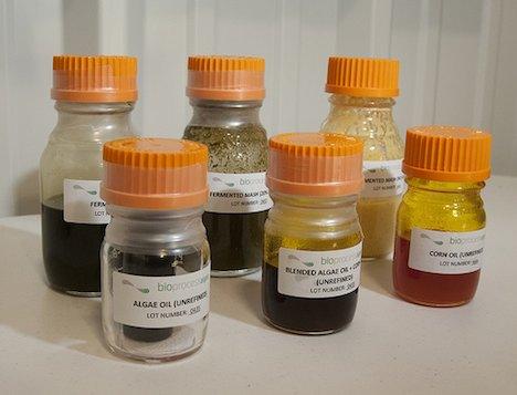 Algae biofuel samples