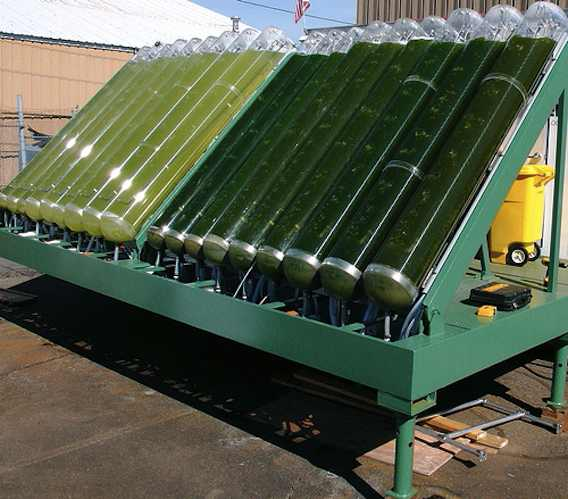 Algae processing tanks