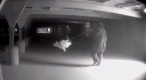 Mercy for Animals video – hen cruelty