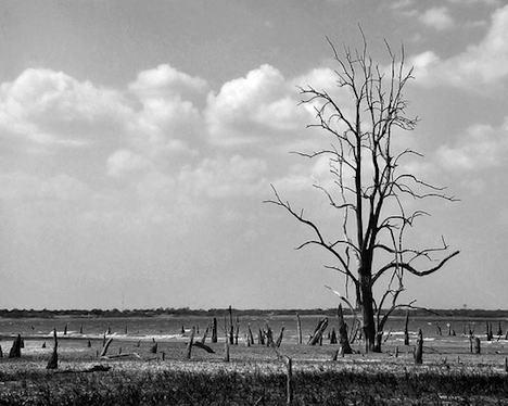 Dead trees – Texas 2011