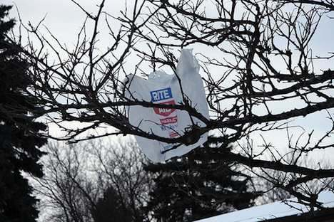 Plastic bag caught in a tree