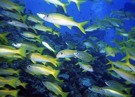 Great Barrier Reef – Australia
