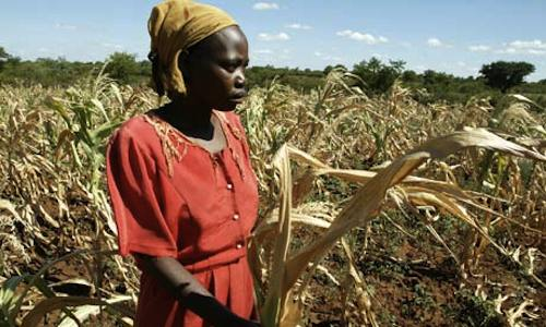 Zimbabwe farmer struck by drought