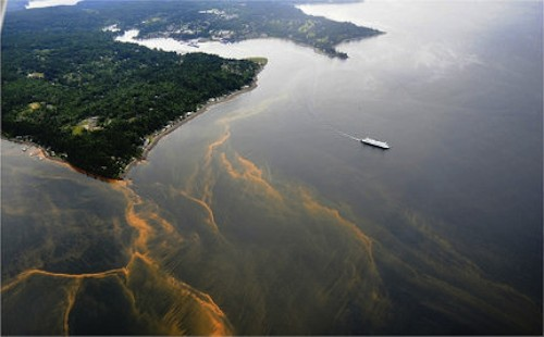 Algal bloom - Washington state