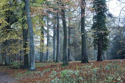 England forest