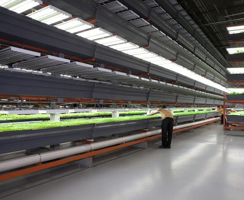FarmedHere vertical farm – Chicago