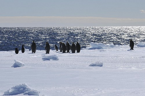Penguins, Ross Sea, Antractica