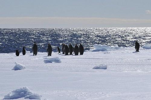 Penguins, Ross Sea, Antractica