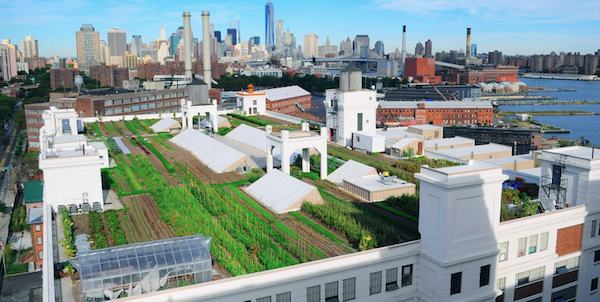 Brooklyn Garage rooftop farm